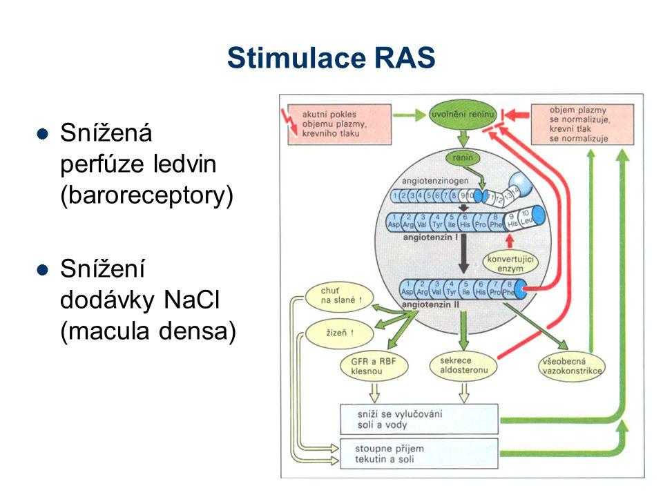 Stimulace RAS Snížená perfúze ledvin (baroreceptory) Snížení dodávky NaCl (macula densa)