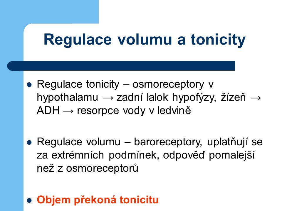 Regulace volumu a tonicity Regulace tonicity – osmoreceptory v hypothalamu → zadní lalok hypofýzy, žízeň → ADH → resorpce vody v ledvině Regulace volu