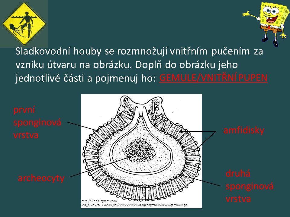 Sladkovodní houby se rozmnožují vnitřním pučením za vzniku útvaru na obrázku. Doplň do obrázku jeho jednotlivé části a pojmenuj ho: amfidisky archeocy