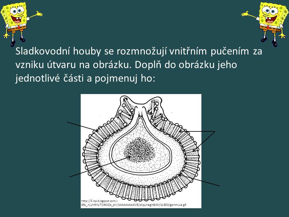 Sladkovodní houby se rozmnožují vnitřním pučením za vzniku útvaru na obrázku. Doplň do obrázku jeho jednotlivé části a pojmenuj ho: http://3.bp.blogsp