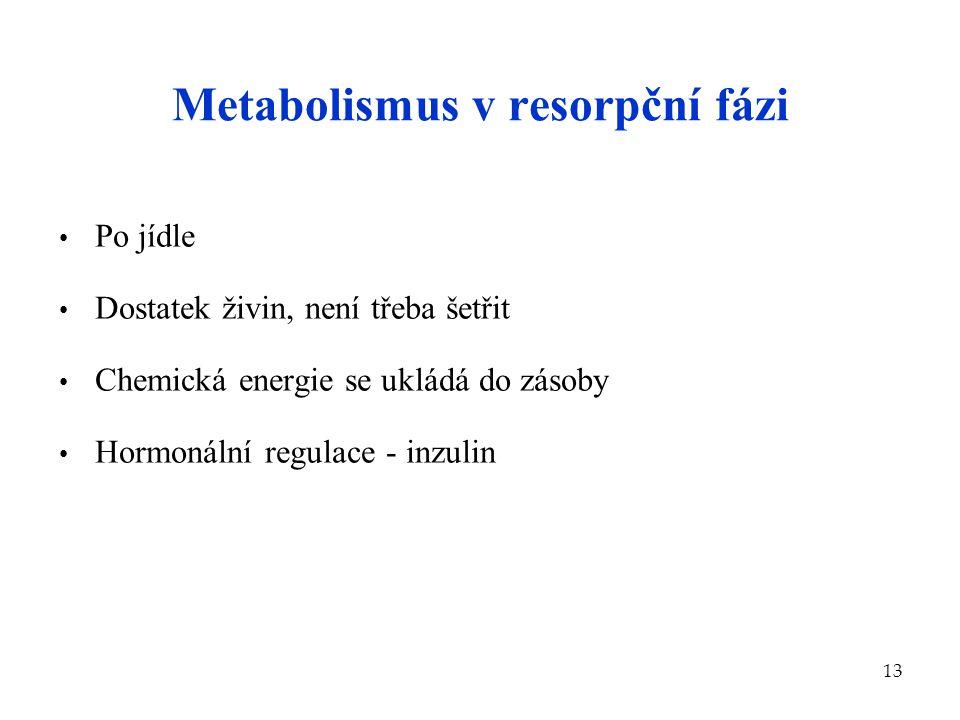 13 Metabolismus v resorpční fázi Po jídle Dostatek živin, není třeba šetřit Chemická energie se ukládá do zásoby Hormonální regulace - inzulin