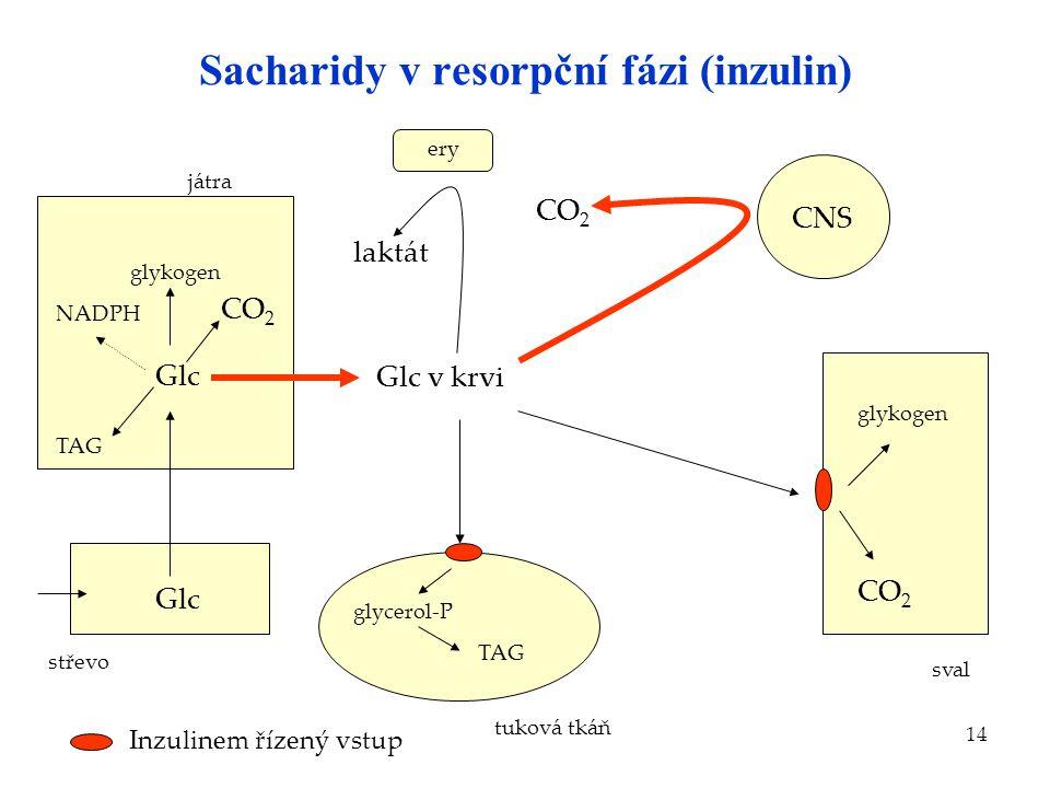 14 Sacharidy v resorpční fázi (inzulin) Glc střevo játra Glc glykogen Glc v krvi laktát ery CNS CO 2 TAG NADPH tuková tkáň glycerol-P TAG sval glykoge