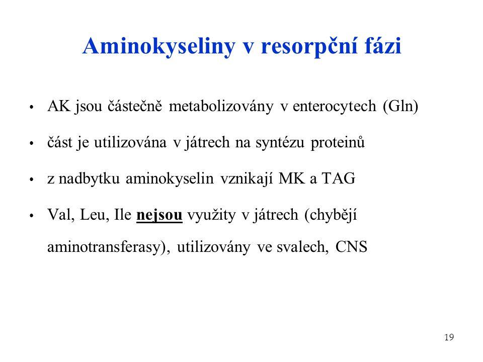 19 Aminokyseliny v resorpční fázi AK jsou částečně metabolizovány v enterocytech (Gln) část je utilizována v játrech na syntézu proteinů z nadbytku am