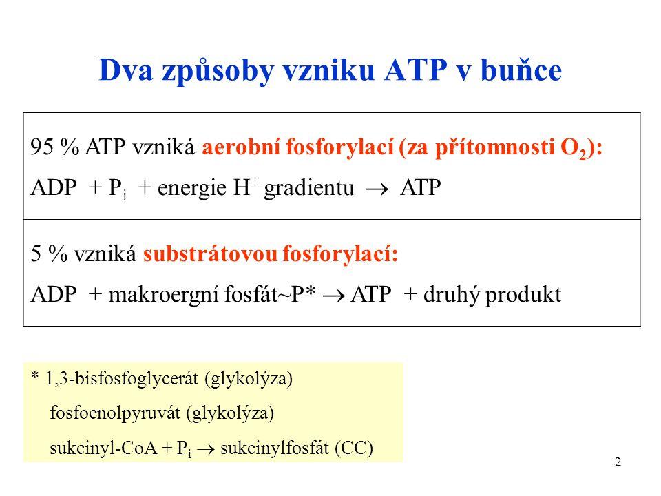 2 Dva způsoby vzniku ATP v buňce 95 % ATP vzniká aerobní fosforylací (za přítomnosti O 2 ): ADP + P i + energie H + gradientu  ATP 5 % vzniká substrá