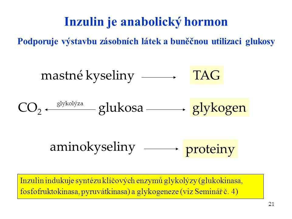 21 Inzulin je anabolický hormon mastné kyselinyTAG glukosaglykogenCO 2 glykolýza aminokyseliny proteiny Podporuje výstavbu zásobních látek a buněčnou