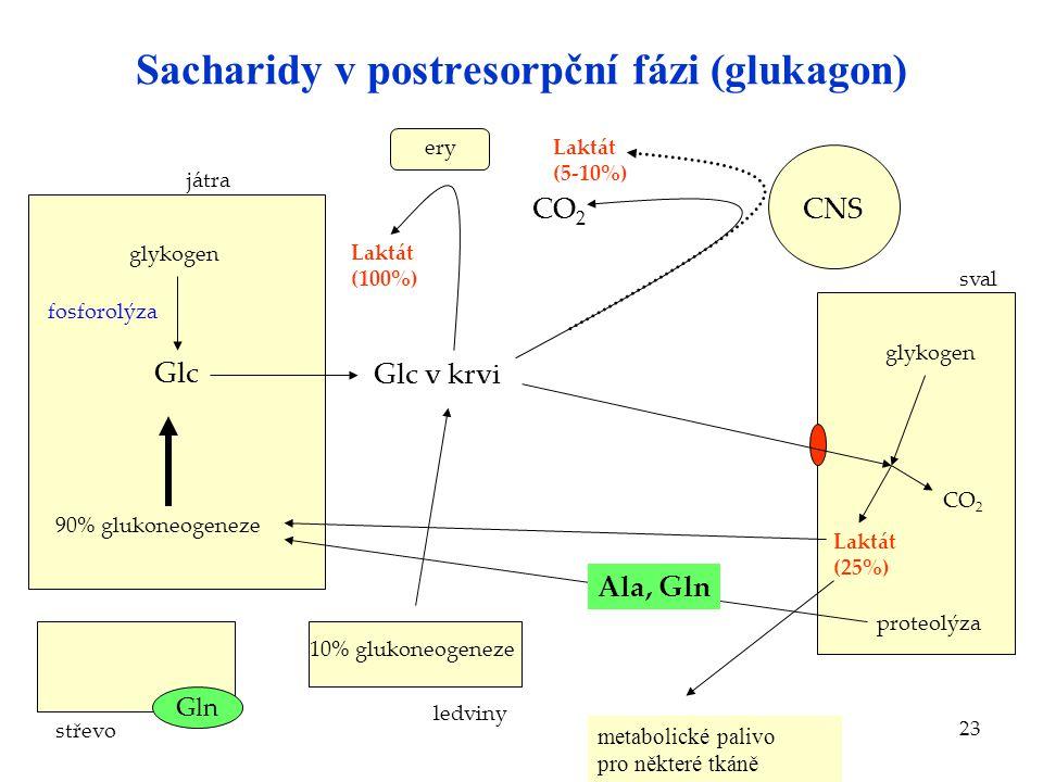 23 Sacharidy v postresorpční fázi (glukagon) střevo játra Glc glykogen Glc v krvi Laktát (100%) ery CNSCO 2 sval glykogen Laktát (5-10%) 90% glukoneog