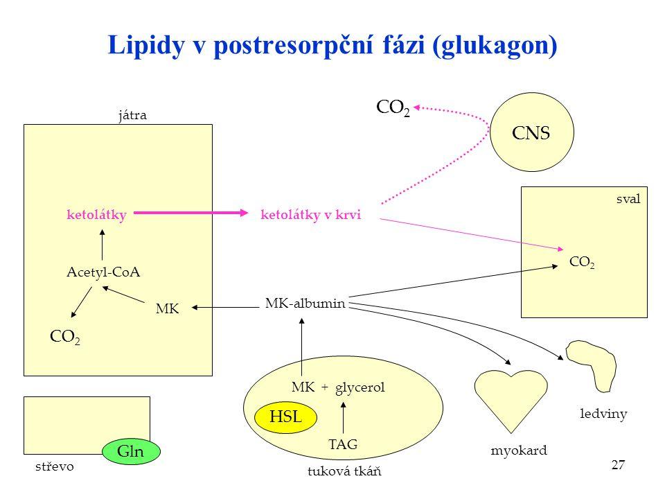 27 Lipidy v postresorpční fázi (glukagon) střevo játra Acetyl-CoA ketolátkyketolátky v krvi CNS CO 2 sval MK CO 2 tuková tkáň MK + glycerol TAG MK-alb