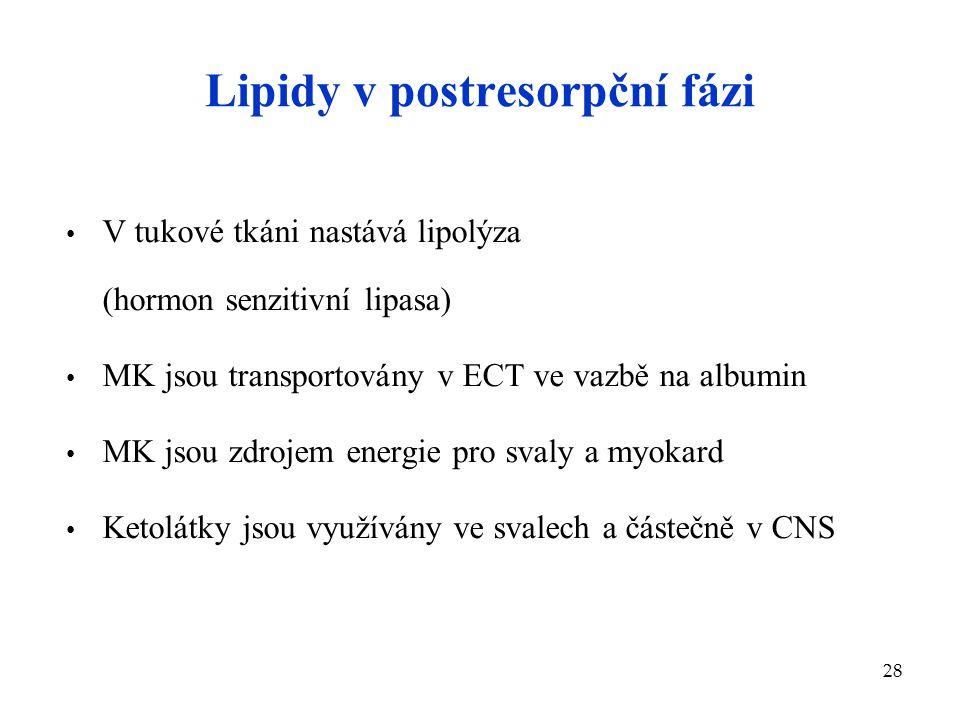 28 Lipidy v postresorpční fázi V tukové tkáni nastává lipolýza (hormon senzitivní lipasa) MK jsou transportovány v ECT ve vazbě na albumin MK jsou zdr