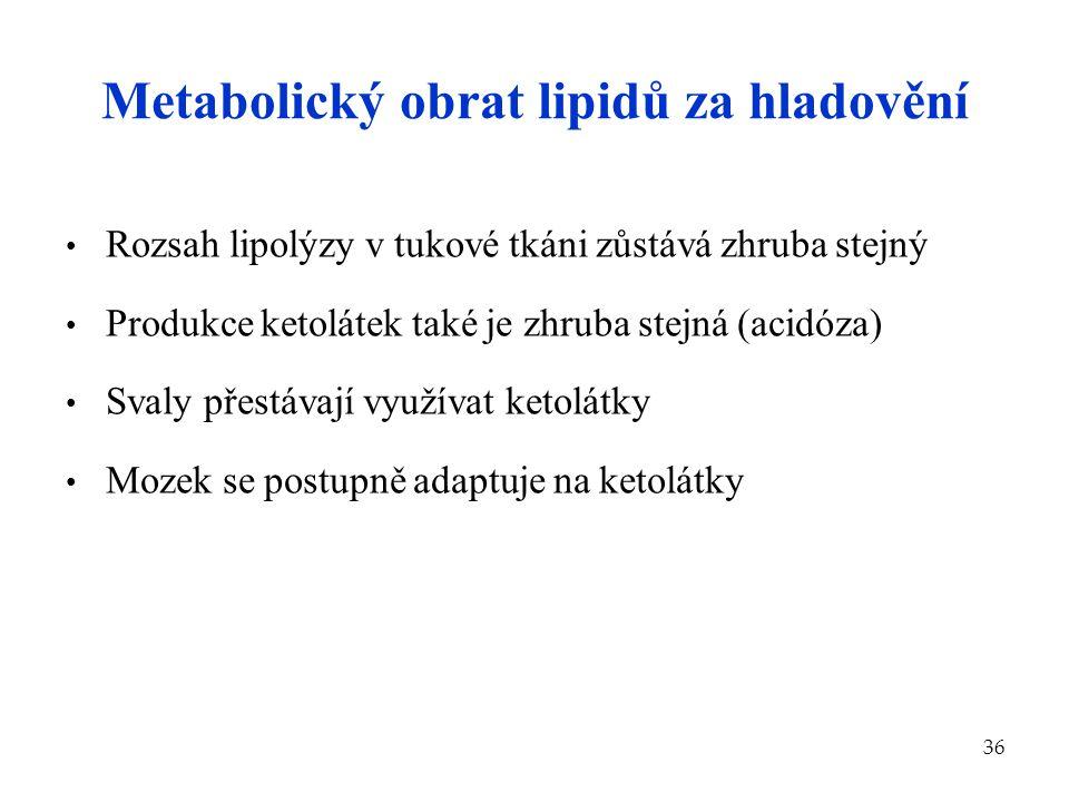 36 Metabolický obrat lipidů za hladovění Rozsah lipolýzy v tukové tkáni zůstává zhruba stejný Produkce ketolátek také je zhruba stejná (acidóza) Svaly