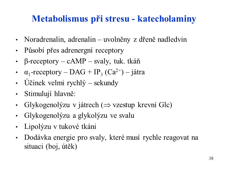 38 Metabolismus při stresu - katecholaminy Noradrenalin, adrenalin – uvolněny z dřeně nadledvin Působí přes adrenergní receptory β-receptory – cAMP –