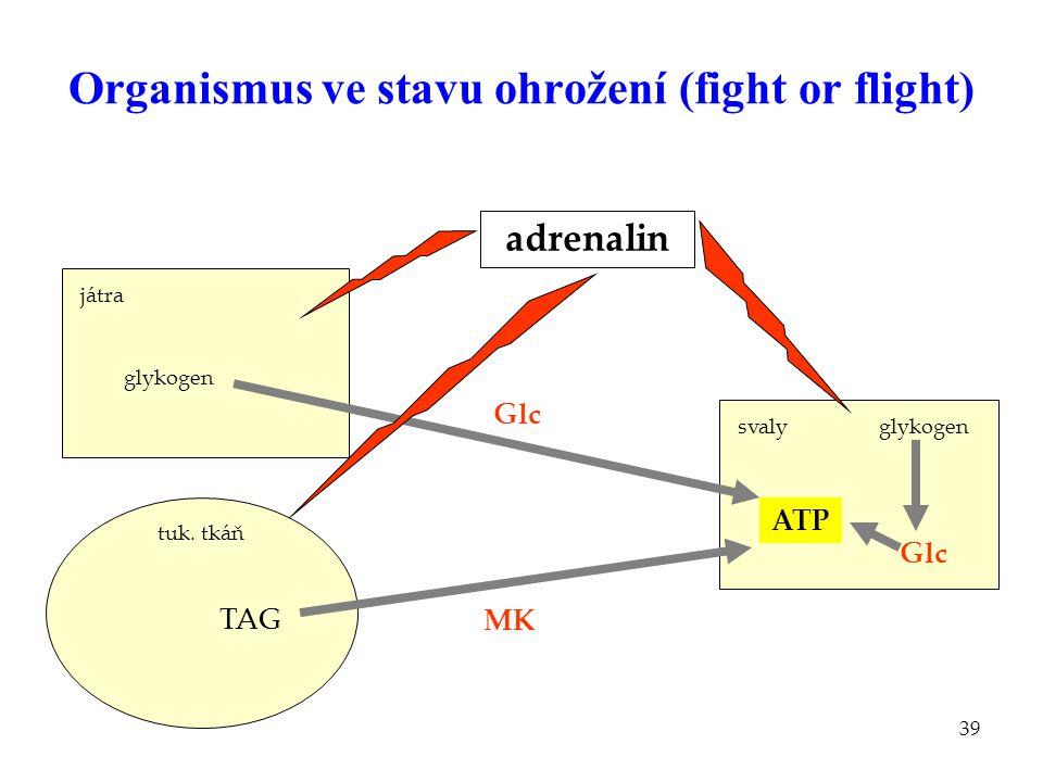 39 Organismus ve stavu ohrožení (fight or flight) játra MK svaly adrenalin TAG glykogen Glc tuk. tkáň ATP