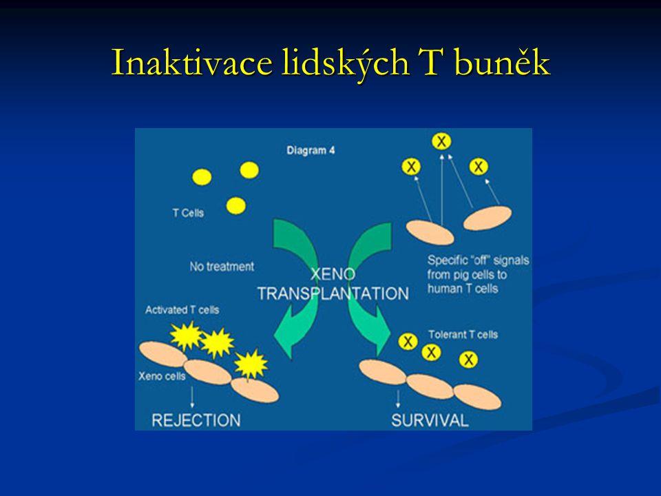 Inaktivace lidských T buněk