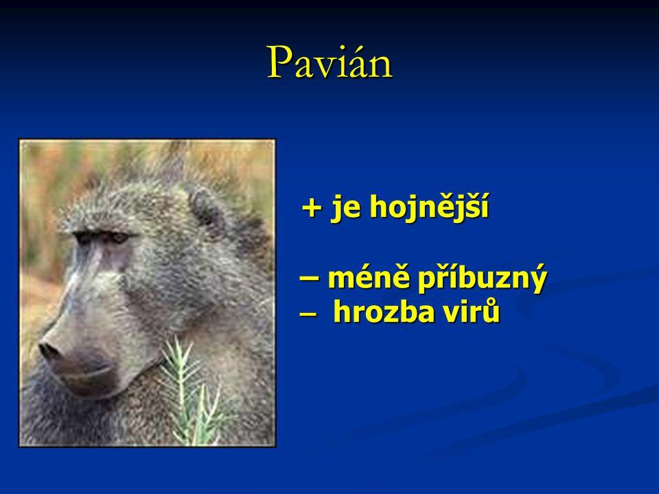 + je hojnější – méně příbuzný – hrozba virů Pavián