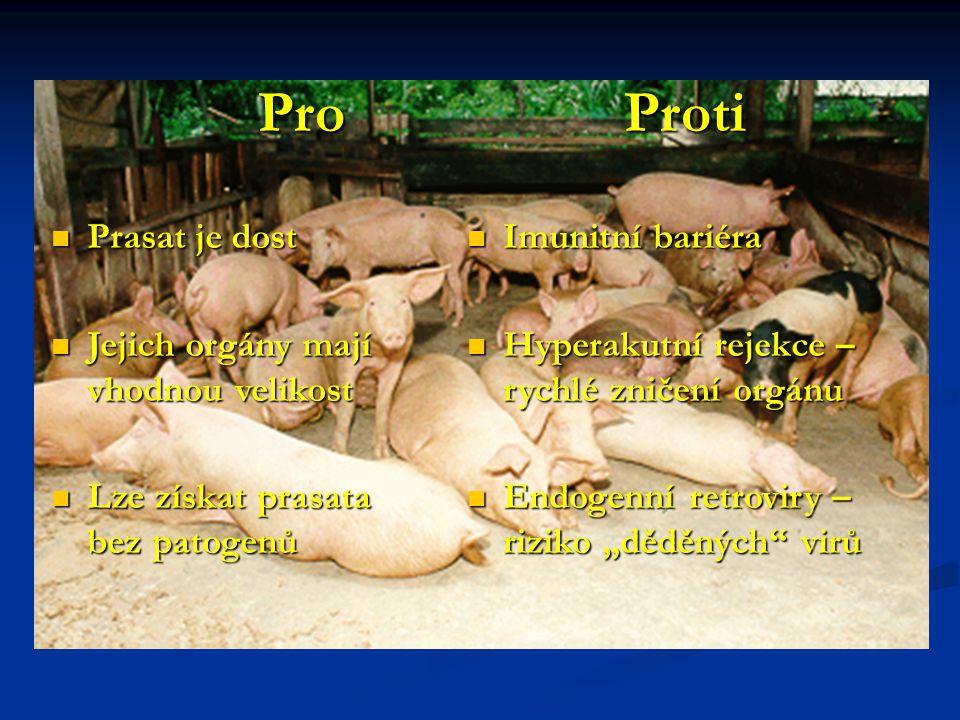 Pro Proti Pro Proti Prasat je dost Prasat je dost Jejich orgány mají vhodnou velikost Jejich orgány mají vhodnou velikost Lze získat prasata bez patog