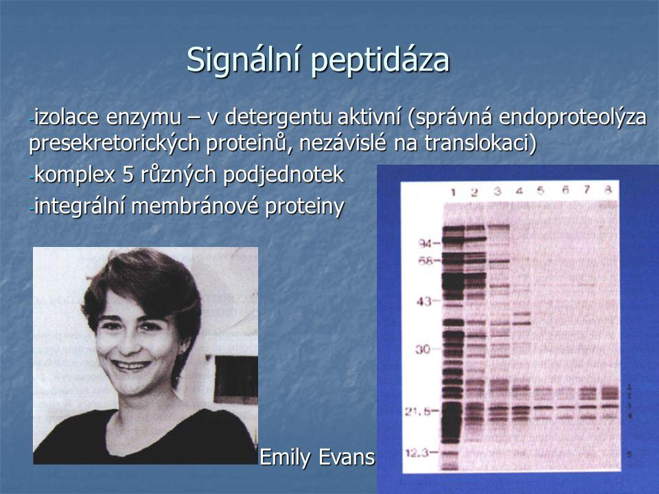 Signální peptidáza - izolace enzymu – v detergentu aktivní (správná endoproteolýza presekretorických proteinů, nezávislé na translokaci) - komplex 5 různých podjednotek - integrální membránové proteiny Emily Evans