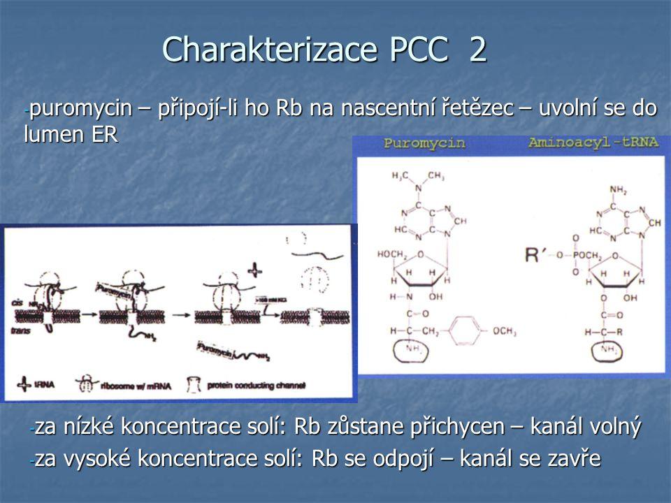 Charakterizace PCC 2 - puromycin – připojí-li ho Rb na nascentní řetězec – uvolní se do lumen ER - za nízké koncentrace solí: Rb zůstane přichycen – kanál volný - za vysoké koncentrace solí: Rb se odpojí – kanál se zavře