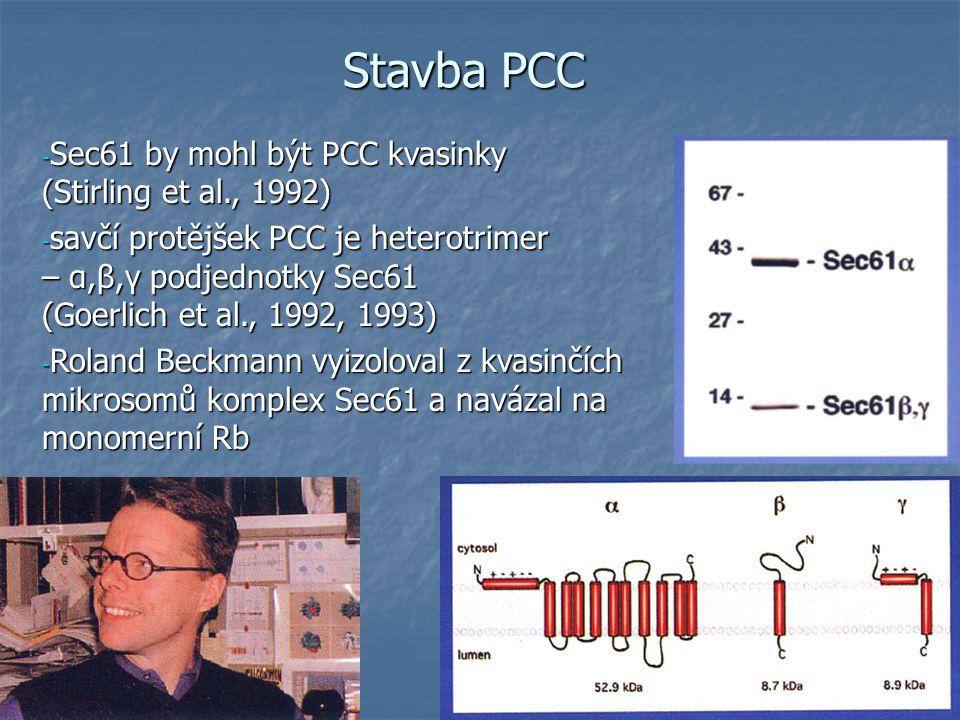 Stavba PCC - Sec61 by mohl být PCC kvasinky (Stirling et al., 1992) - savčí protějšek PCC je heterotrimer – α,β,γ podjednotky Sec61 (Goerlich et al., 1992, 1993) - Roland Beckmann vyizoloval z kvasinčích mikrosomů komplex Sec61 a navázal na monomerní Rb