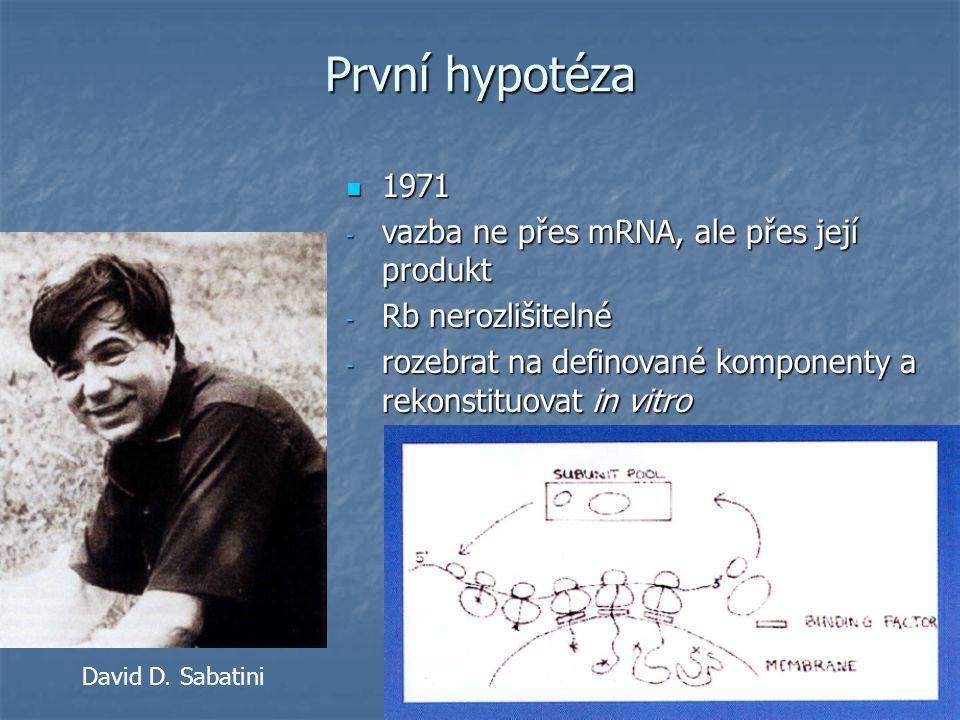- translace poly(A) mRNA lehkého řetězce IgG buněk myelomu in vitro bez mikrosomů poskytla větší produkt (o 2-3kDa) První náznaky Bernhard Dobberstein
