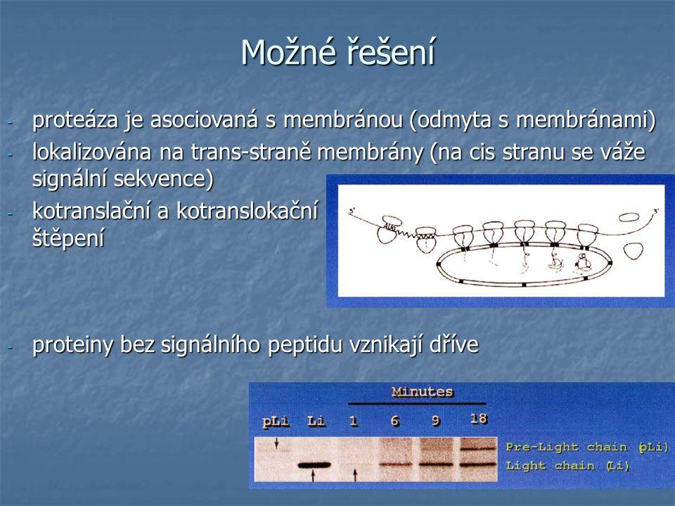 - proteáza je asociovaná s membránou (odmyta s membránami) - lokalizována na trans-straně membrány (na cis stranu se váže signální sekvence) - kotranslační a kotranslokační štěpení - proteiny bez signálního peptidu vznikají dříve Možné řešení