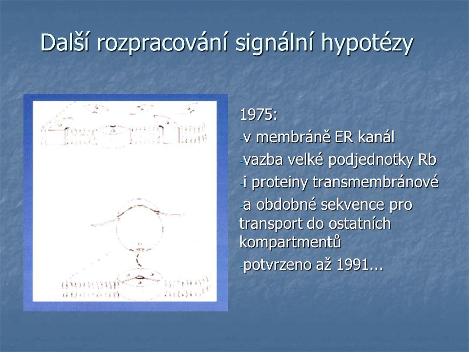 Další rozpracování signální hypotézy 1975: - v membráně ER kanál - vazba velké podjednotky Rb - i proteiny transmembránové - a obdobné sekvence pro transport do ostatních kompartmentů - potvrzeno až 1991...