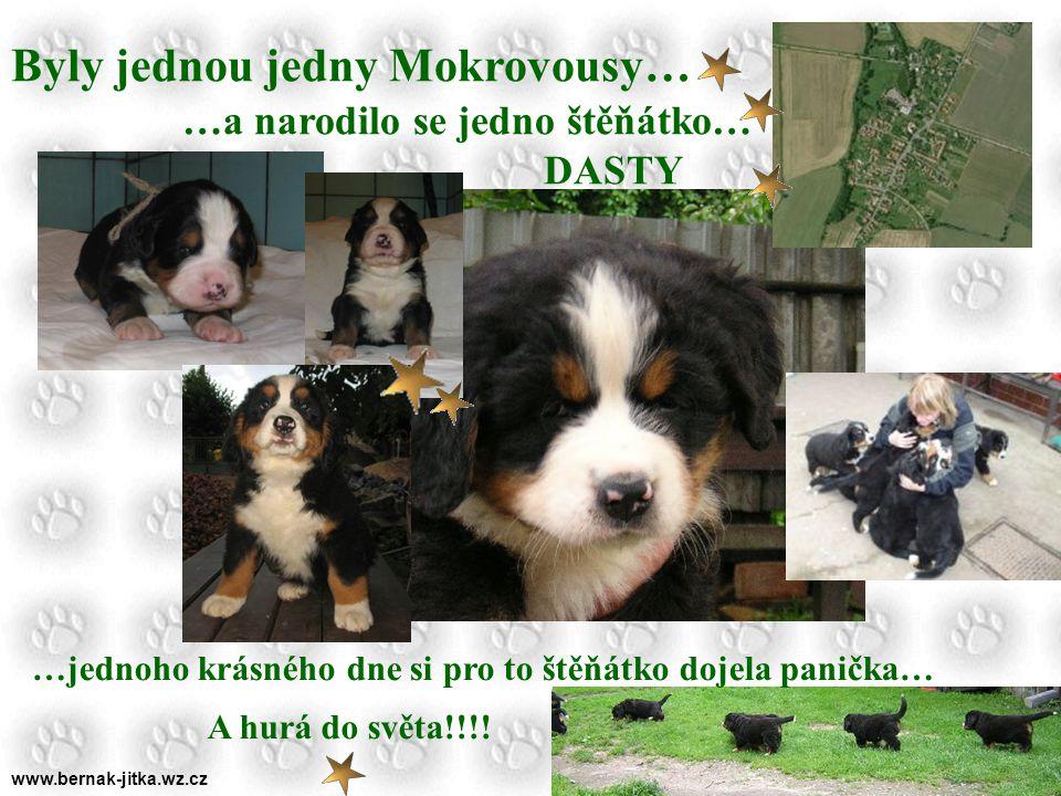 www.bernak-jitka.wz.cz Nudíte se …..pořiďte si medvídka berňáka …..už klepe!!