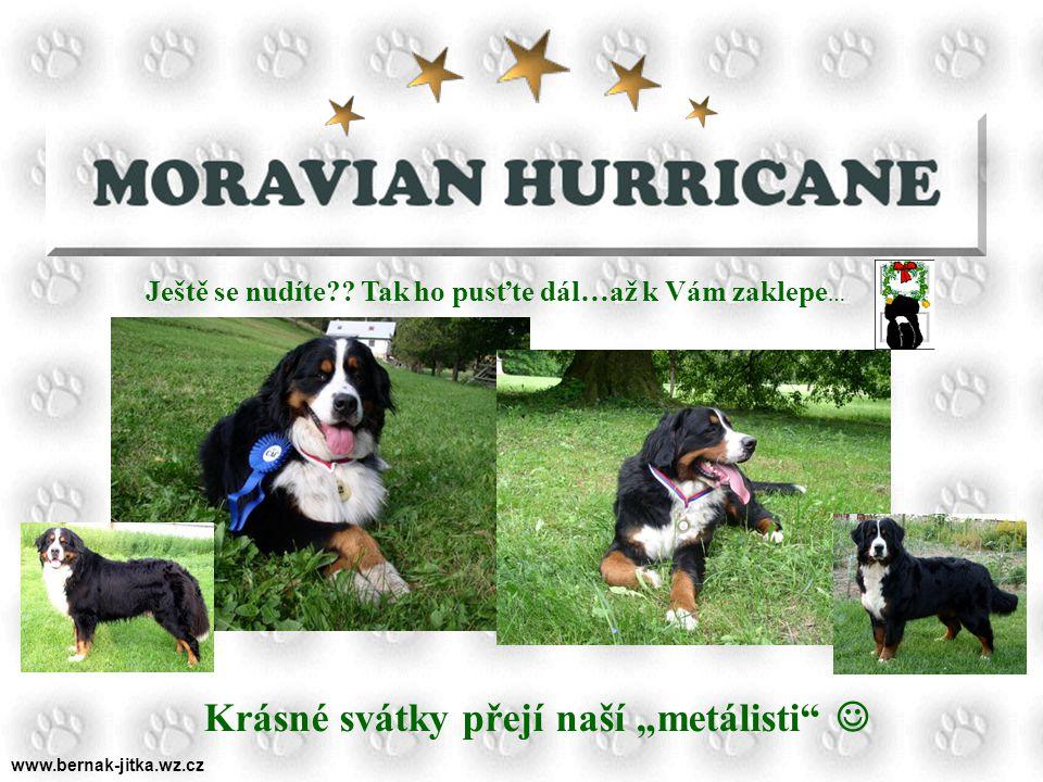 www.bernak-jitka.wz.cz ….získali jsme spoustu nových kamarádů….