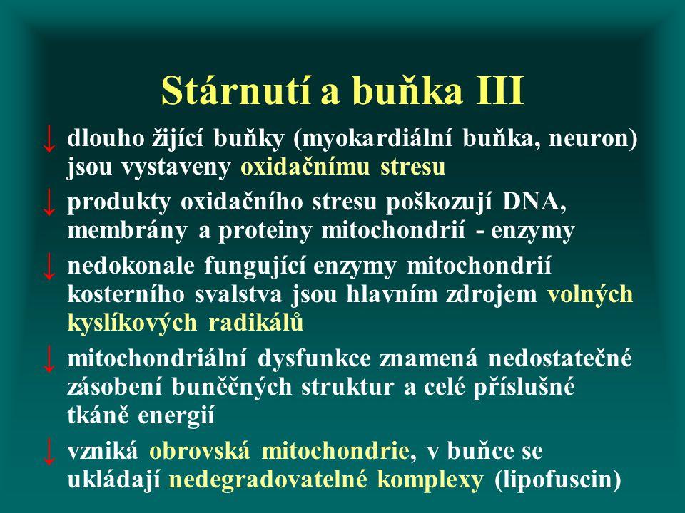 Stárnutí a buňka III ↓ dlouho žijící buňky (myokardiální buňka, neuron) jsou vystaveny oxidačnímu stresu ↓ produkty oxidačního stresu poškozují DNA, membrány a proteiny mitochondrií - enzymy ↓ nedokonale fungující enzymy mitochondrií kosterního svalstva jsou hlavním zdrojem volných kyslíkových radikálů ↓ mitochondriální dysfunkce znamená nedostatečné zásobení buněčných struktur a celé příslušné tkáně energií ↓ vzniká obrovská mitochondrie, v buňce se ukládají nedegradovatelné komplexy (lipofuscin)