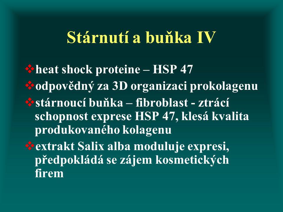 Stárnutí a buňka IV  heat shock proteine – HSP 47  odpovědný za 3D organizaci prokolagenu  stárnoucí buňka – fibroblast - ztrácí schopnost exprese HSP 47, klesá kvalita produkovaného kolagenu  extrakt Salix alba moduluje expresi, předpokládá se zájem kosmetických firem