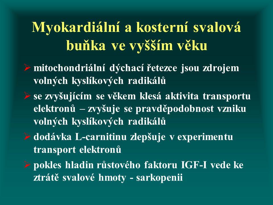 Myokardiální a kosterní svalová buňka ve vyšším věku  mitochondriální dýchací řetezce jsou zdrojem volných kyslíkových radikálů  se zvyšujícím se věkem klesá aktivita transportu elektronů – zvyšuje se pravděpodobnost vzniku volných kyslíkových radikálů  dodávka L-carnitinu zlepšuje v experimentu transport elektronů  pokles hladin růstového faktoru IGF-I vede ke ztrátě svalové hmoty - sarkopenii