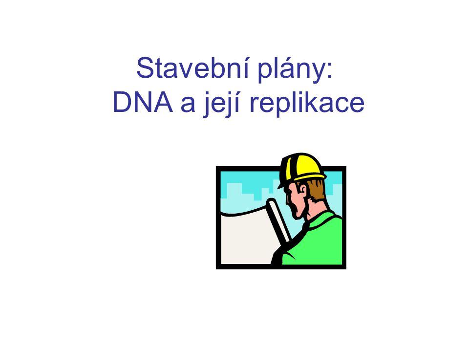 Stavební plány: DNA a její replikace