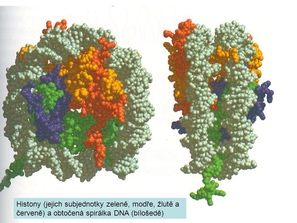 Histony (jejich subjednotky zeleně, modře, žlutě a červeně) a obtočená spirálka DNA (bílošedě)