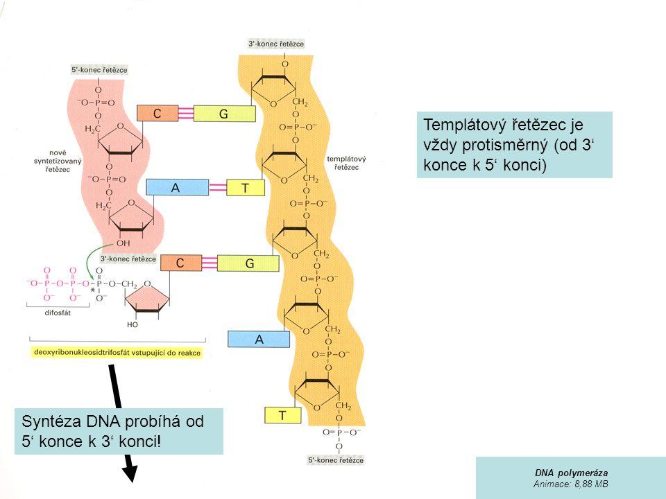 Templátový řetězec je vždy protisměrný (od 3' konce k 5' konci) Syntéza DNA probíhá od 5' konce k 3' konci.