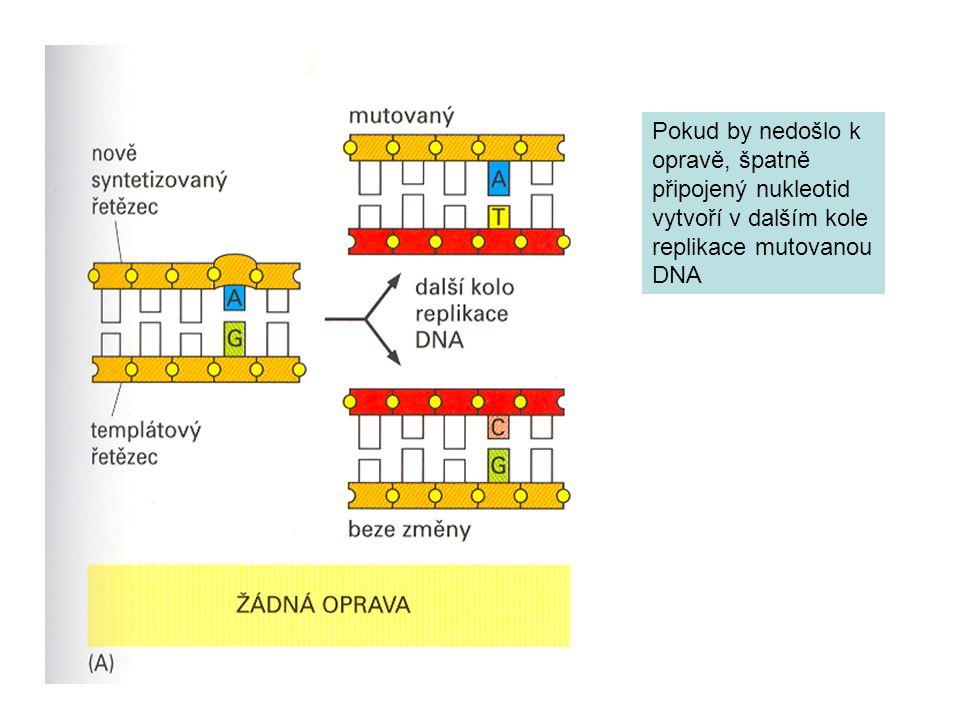 Pokud by nedošlo k opravě, špatně připojený nukleotid vytvoří v dalším kole replikace mutovanou DNA