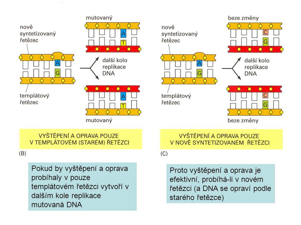Pokud by vyštěpení a oprava probíhaly v pouze templátovém řetězci vytvoří v dalším kole replikace mutovaná DNA Proto vyštěpení a oprava je efektivní, probíhá-li v novém řetězci (a DNA se opraví podle starého řetězce)
