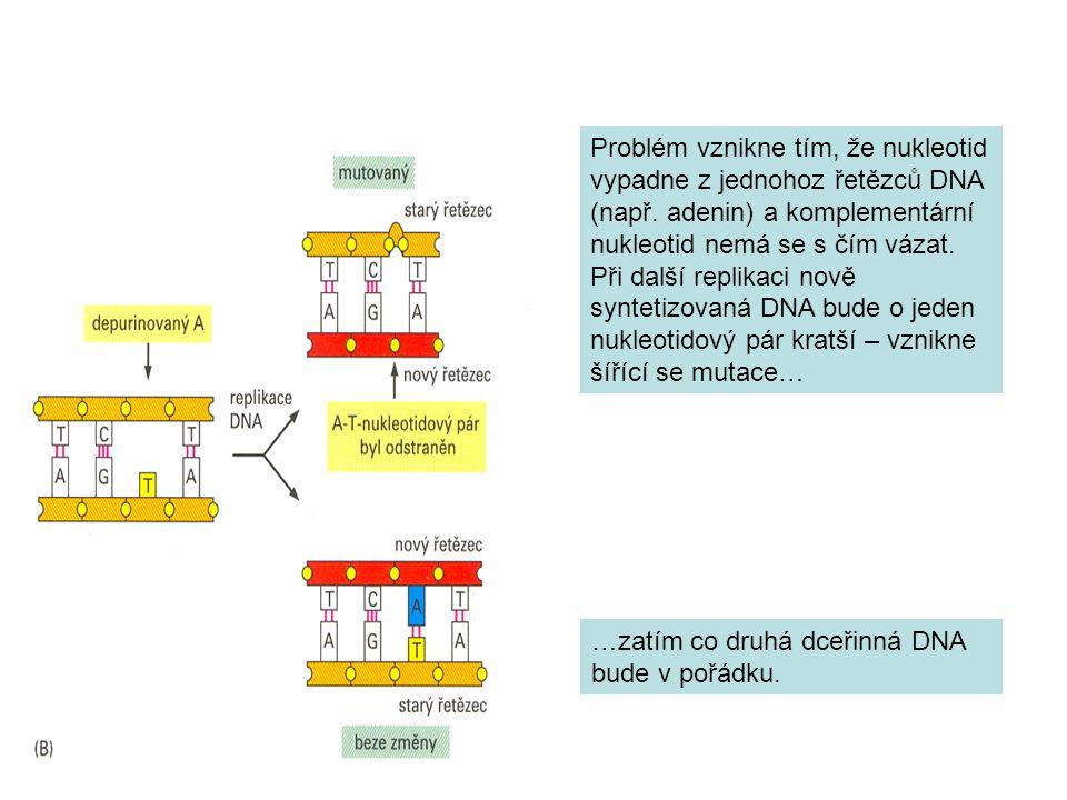 Problém vznikne tím, že nukleotid vypadne z jednohoz řetězců DNA (např.