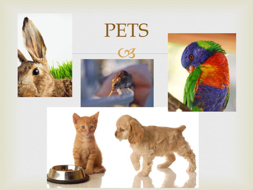  PETS