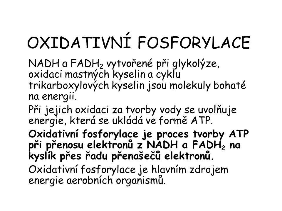 OXIDATIVNÍ FOSFORYLACE NADH a FADH 2 vytvořené při glykolýze, oxidaci mastných kyselin a cyklu trikarboxylových kyselin jsou molekuly bohaté na energi