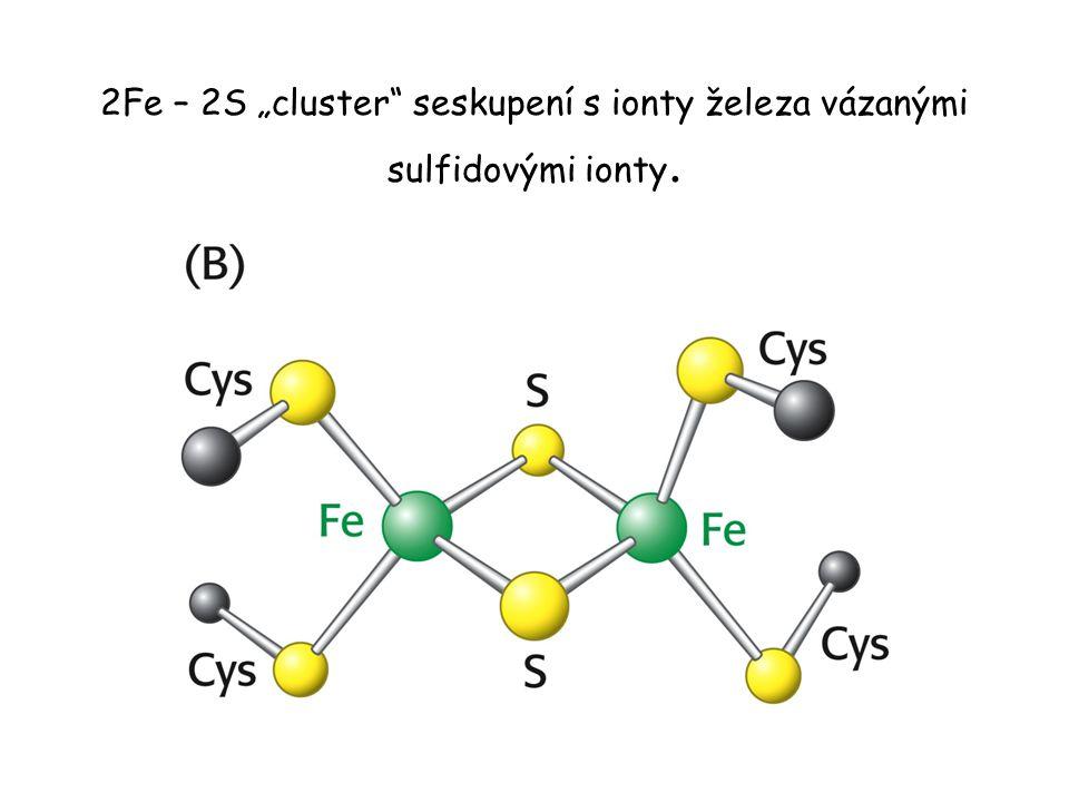 """2Fe – 2S """"cluster"""" seskupení s ionty železa vázanými sulfidovými ionty."""