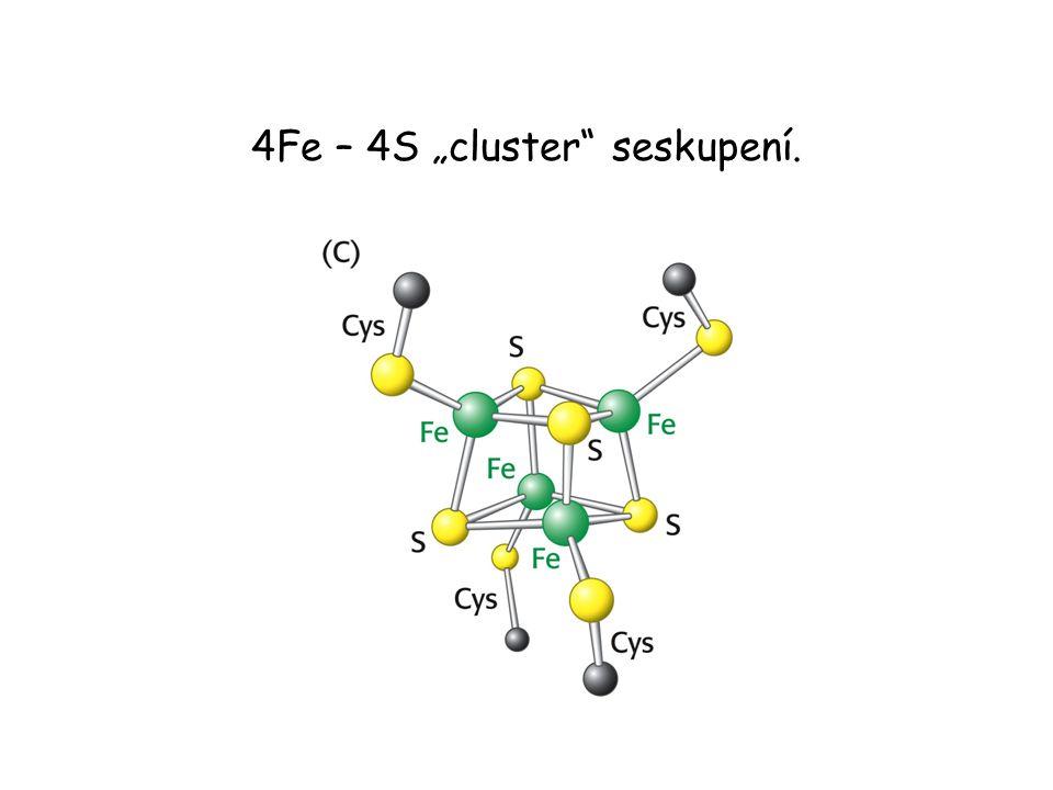 """4Fe – 4S """"cluster"""" seskupení."""