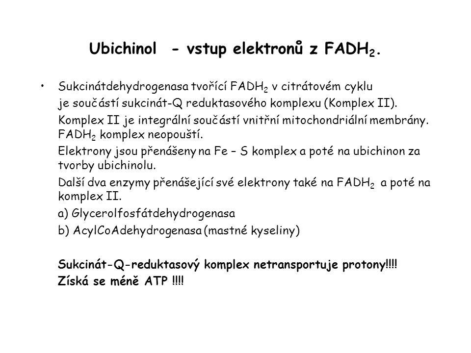 Ubichinol - vstup elektronů z FADH 2. Sukcinátdehydrogenasa tvořící FADH 2 v citrátovém cyklu je součástí sukcinát-Q reduktasového komplexu (Komplex I