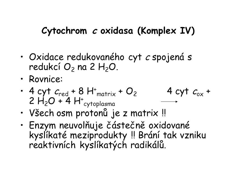 Cytochrom c oxidasa (Komplex IV) Oxidace redukovaného cyt c spojená s redukcí O 2 na 2 H 2 O. Rovnice: 4 cyt c red + 8 H + matrix + O 2 4 cyt c ox + 2