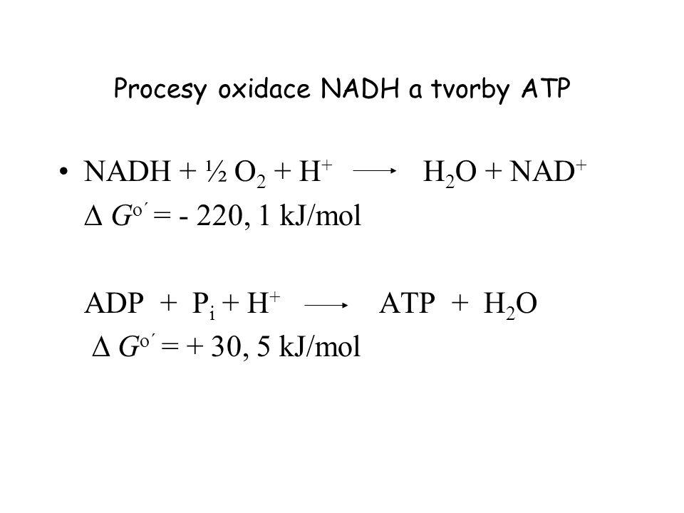 Procesy oxidace NADH a tvorby ATP NADH + ½ O 2 + H + H 2 O + NAD +  G o´ = - 220, 1 kJ/mol ADP + P i + H + ATP + H 2 O  G o´ = + 30, 5 kJ/mol