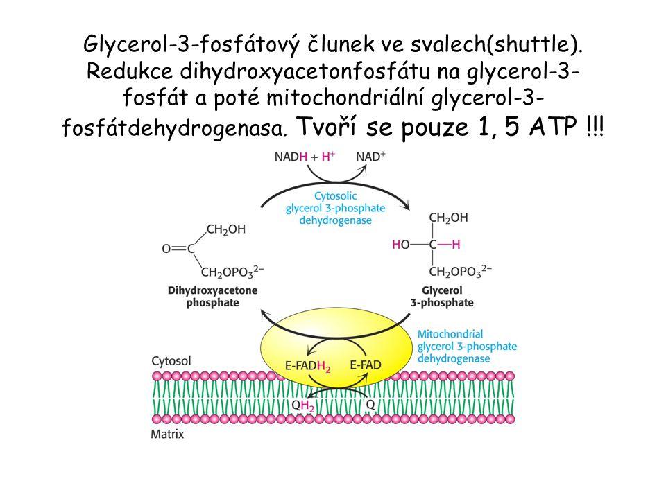 Glycerol-3-fosfátový člunek ve svalech(shuttle). Redukce dihydroxyacetonfosfátu na glycerol-3- fosfát a poté mitochondriální glycerol-3- fosfátdehydro