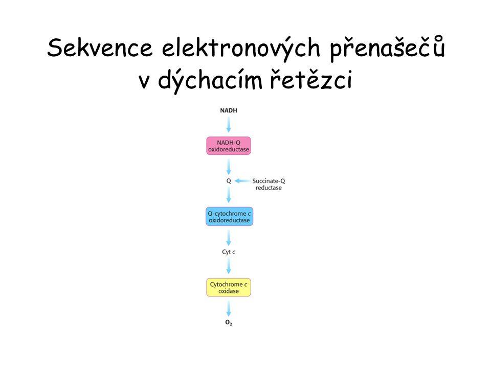 Spojení přenosu elektron – proton.