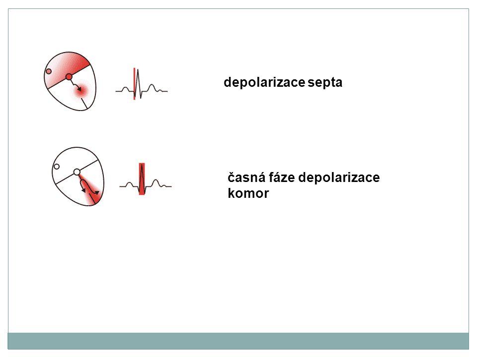 časná fáze depolarizace komor