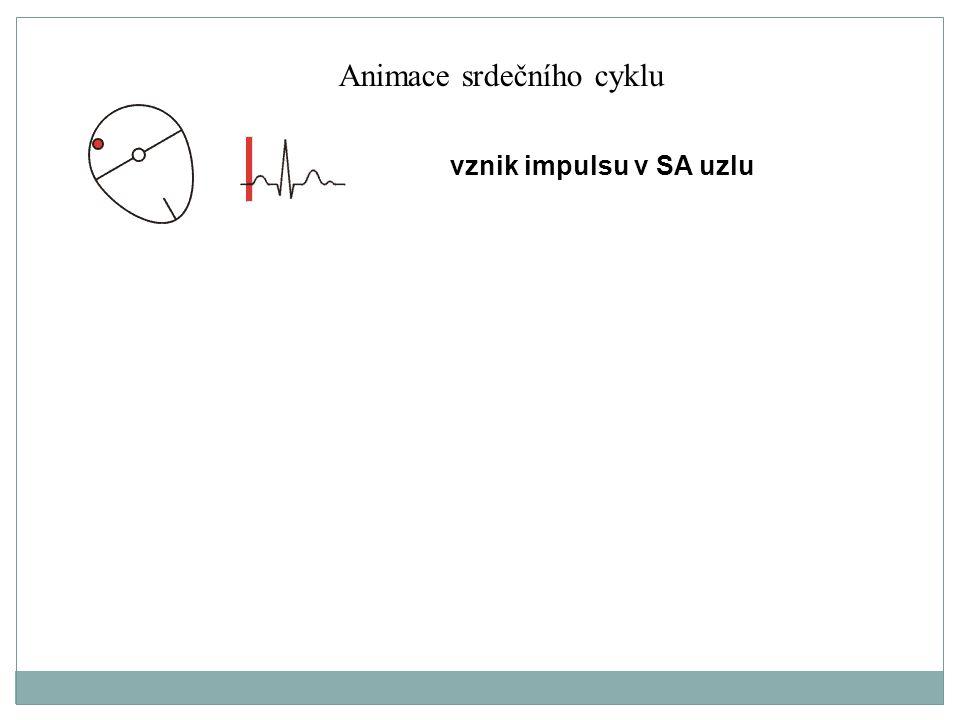 vznik impulsu v SA uzlu Animace srdečního cyklu