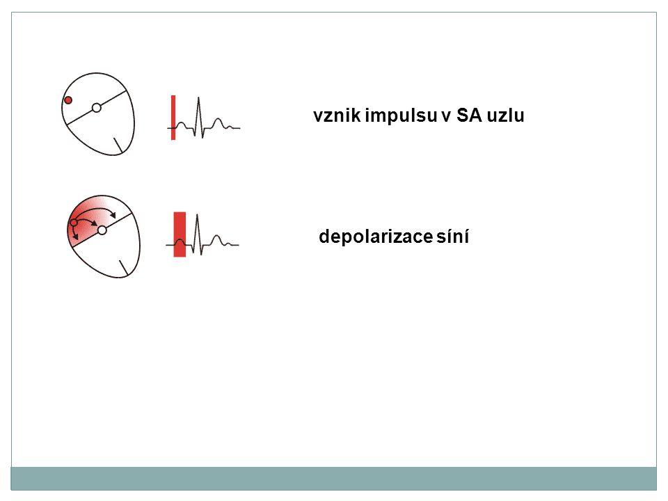 vznik impulsu v SA uzlu depolarizace síní