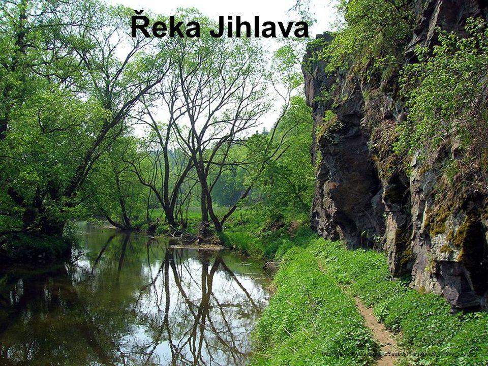 Řeka Jihlava http://cs.wikipedia.org/wiki/Soubor:Pribyslavice_jihlava_river.jpg
