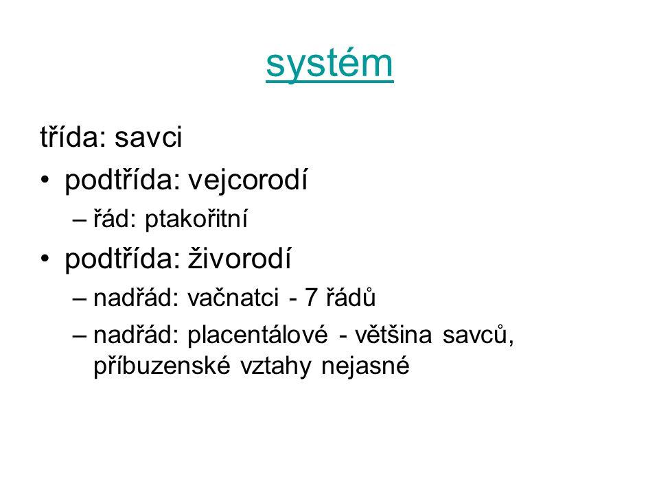 systém třída: savci podtřída: vejcorodí –řád: ptakořitní podtřída: živorodí –nadřád: vačnatci - 7 řádů –nadřád: placentálové - většina savců, příbuzen