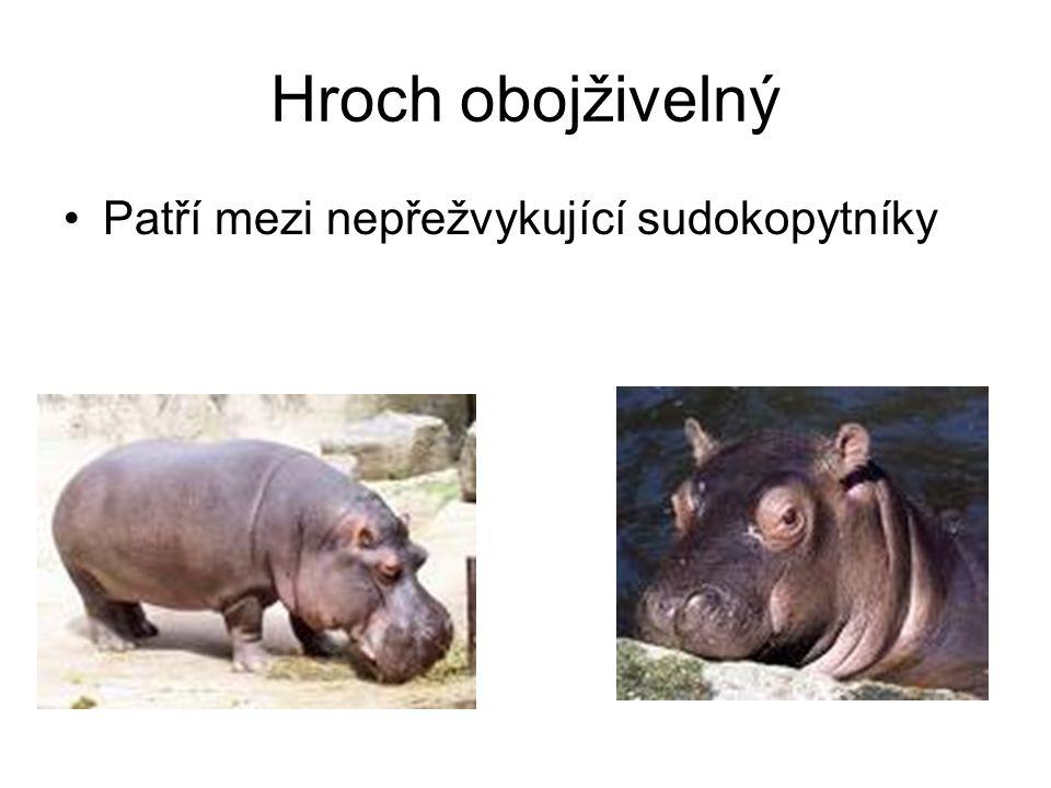 Zdroje: http://www.google.cz/
